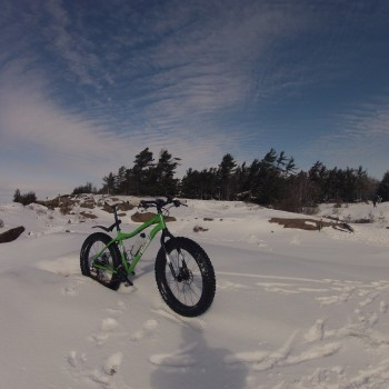 Fatbike parked with windswept pines on horizon